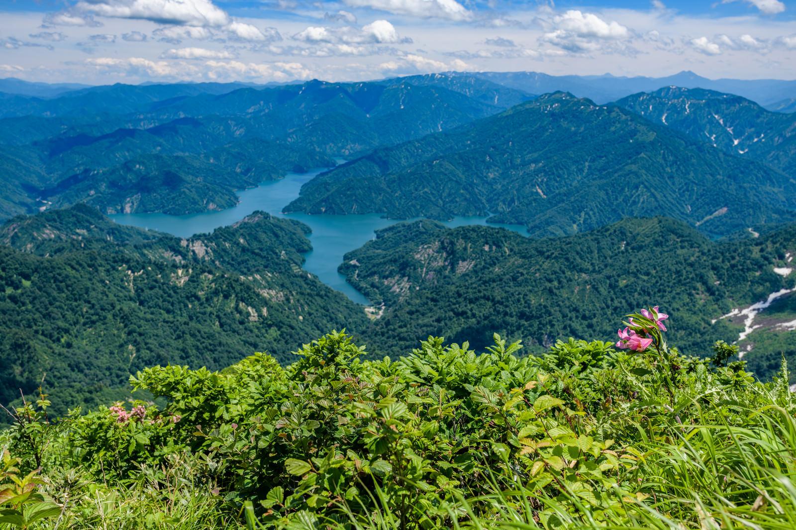 「ヒメサユリが自生する山から俯瞰する田子倉湖(田子倉ダム)」の写真
