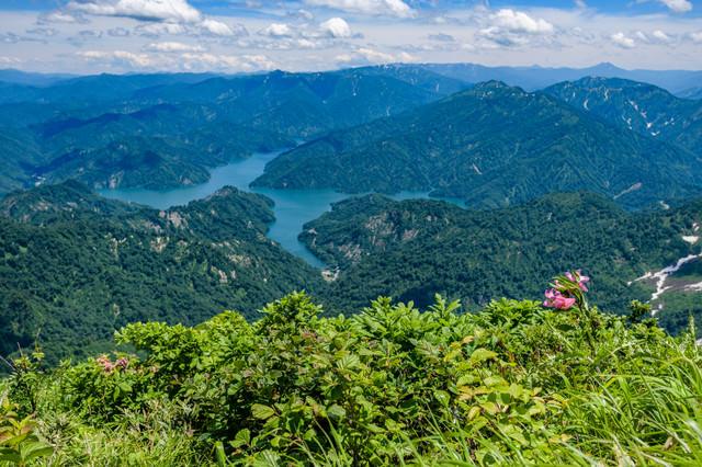 ヒメサユリが自生する山から俯瞰する田子倉湖(田子倉ダム)の写真