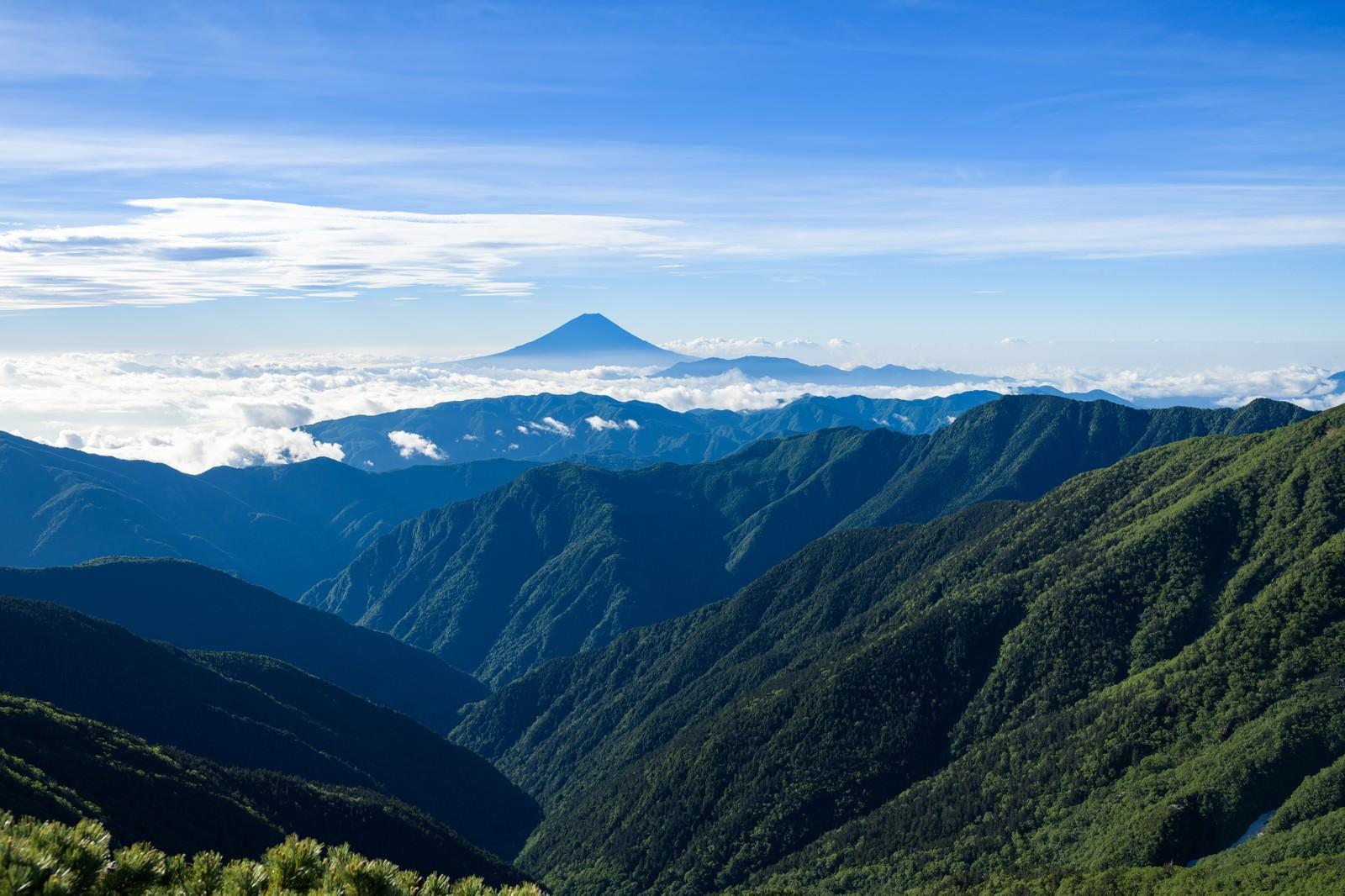 「南アルプスの深い森から見る富士山」の写真