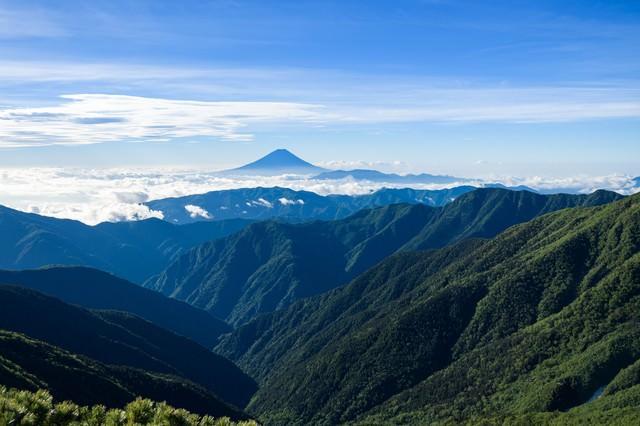 南アルプスの深い森から見る富士山の写真