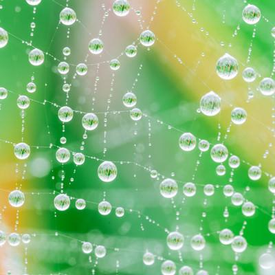 雨上がりの蜘蛛の巣に輝く水滴の写真