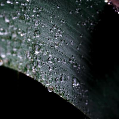 水滴がまとわりつく草の質感の写真
