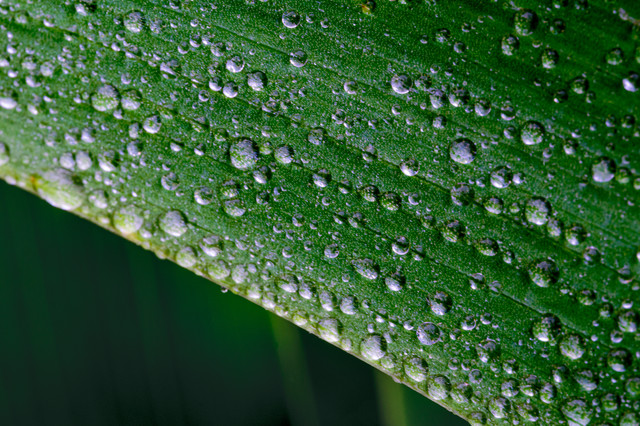 草の表面にまとわりつく水滴の写真