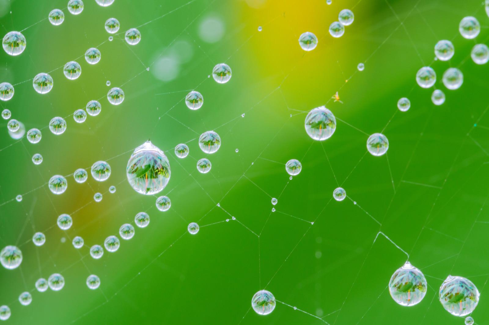 「蜘蛛の巣に付いた雨粒の中に映る草木」の写真