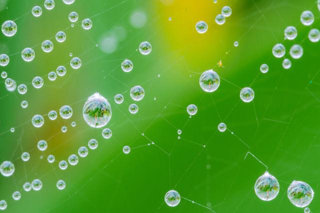蜘蛛の巣に付いた雨粒の中に映る草木の写真