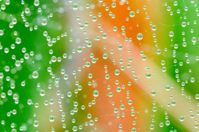 蜘蛛の巣に浮かぶ水滴に宿る草木の写真