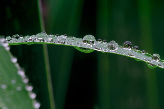 雨の滴を纏った草の写真