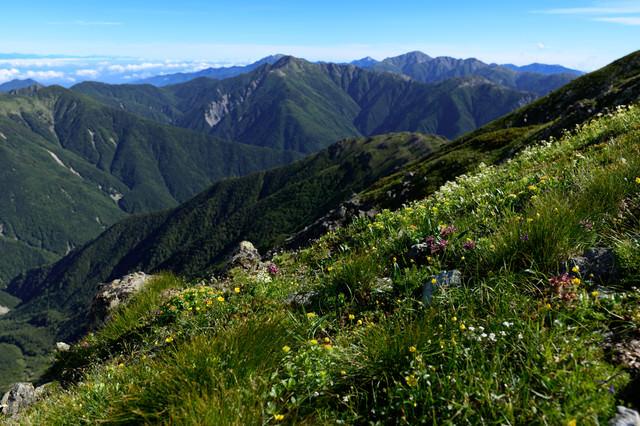 山に咲く花と南アルプス北部の山々の写真