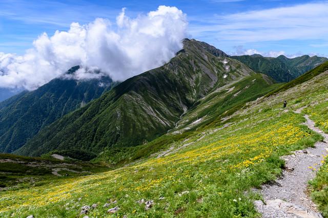 花畑の登山道と赤石岳(南アルプス)の写真