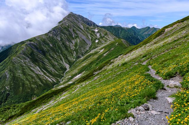 花畑を進む登山道と赤石岳(南アルプス)の写真