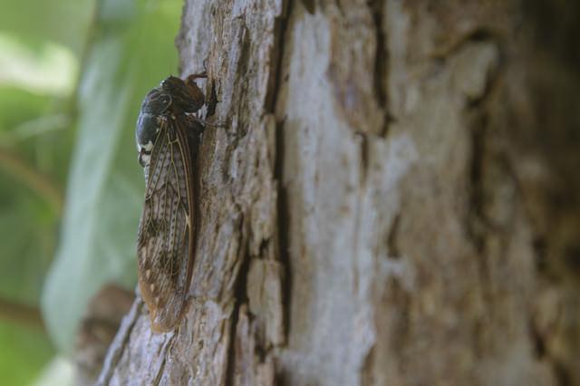 夏の終わりを待つ蝉の写真