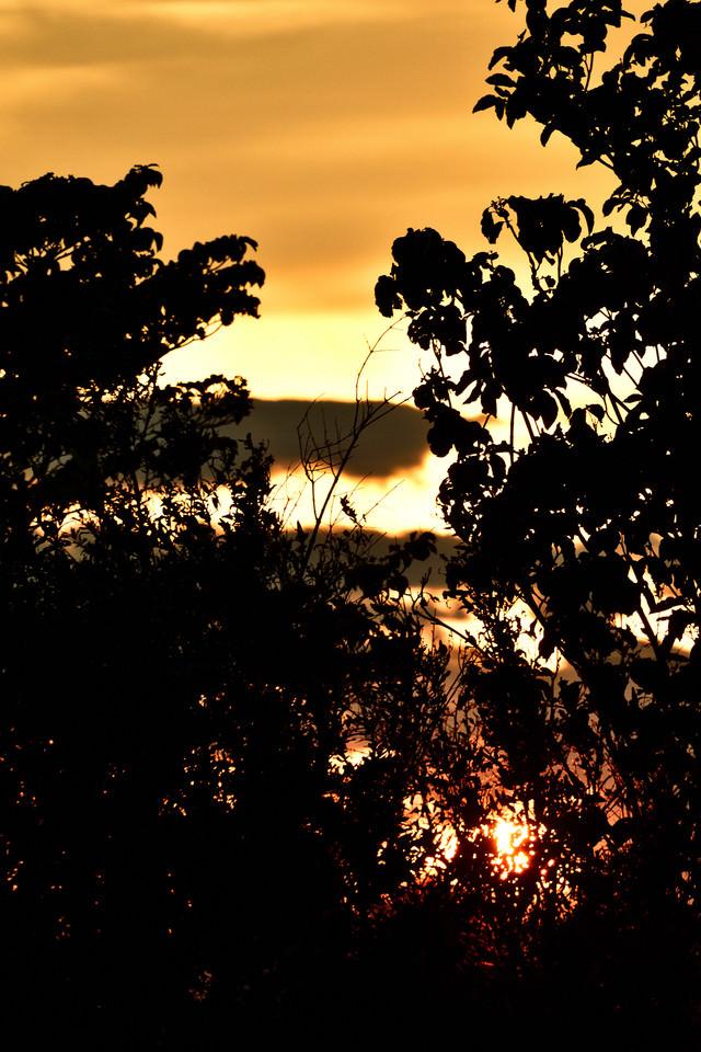 夕日と木々のシルエットの写真