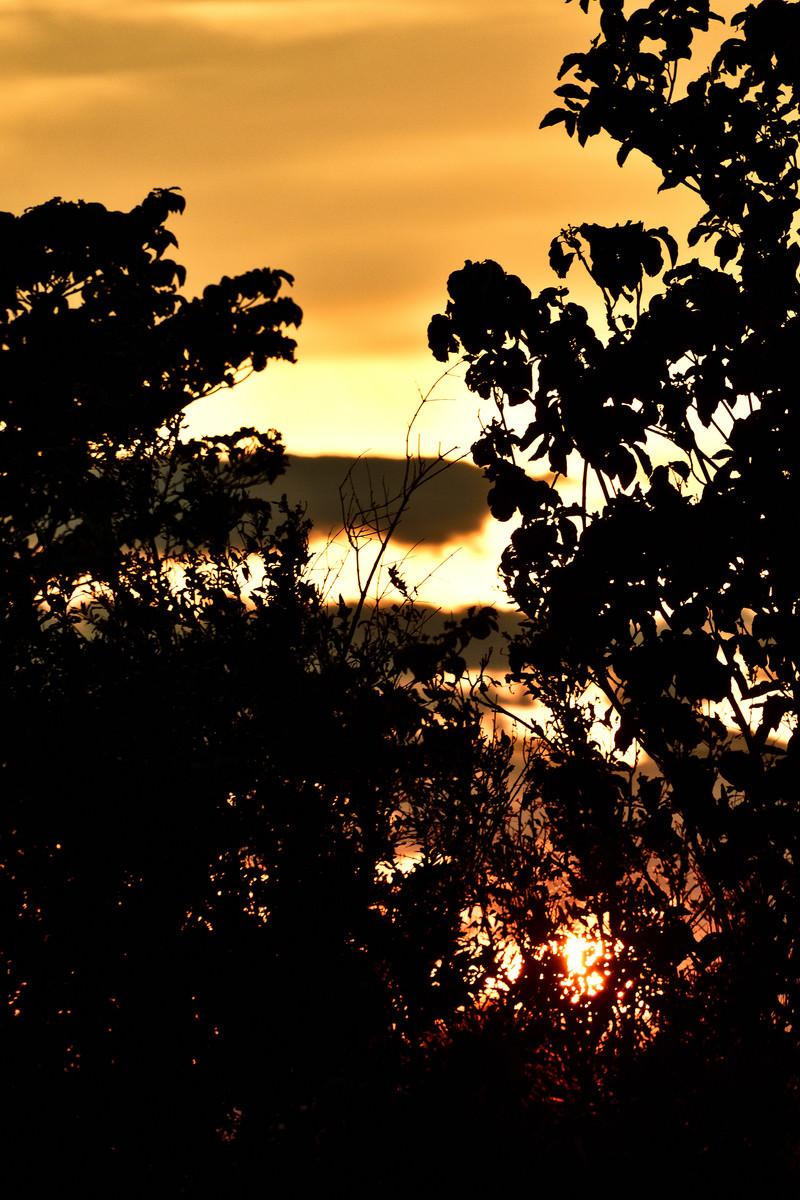 「夕日と木々のシルエット」の写真