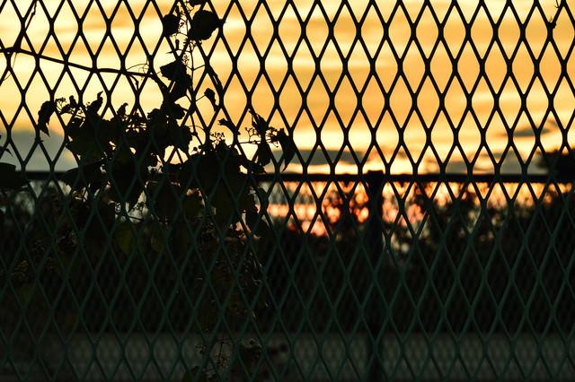 フェンス越しに見る夕焼けの写真