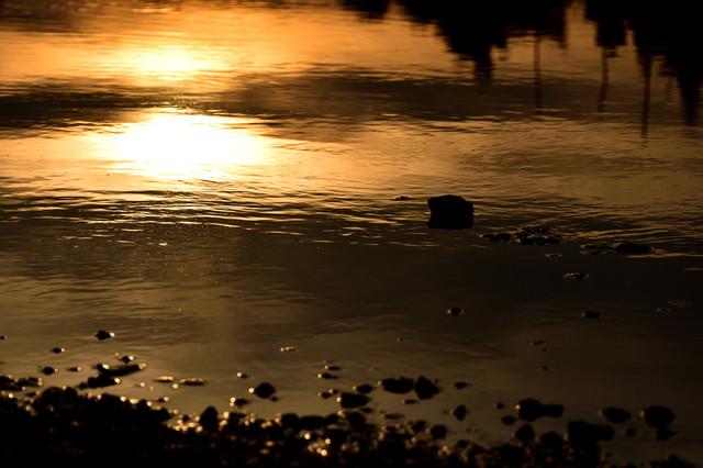 夕焼けに染まる水溜りの写真