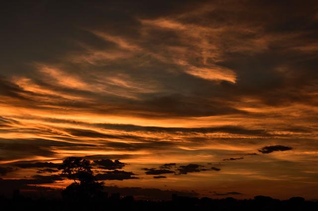 燃えるような見沼の空の写真