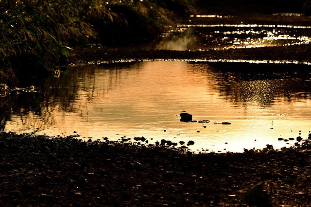 夕暮れ染まる大きな水溜まりの写真