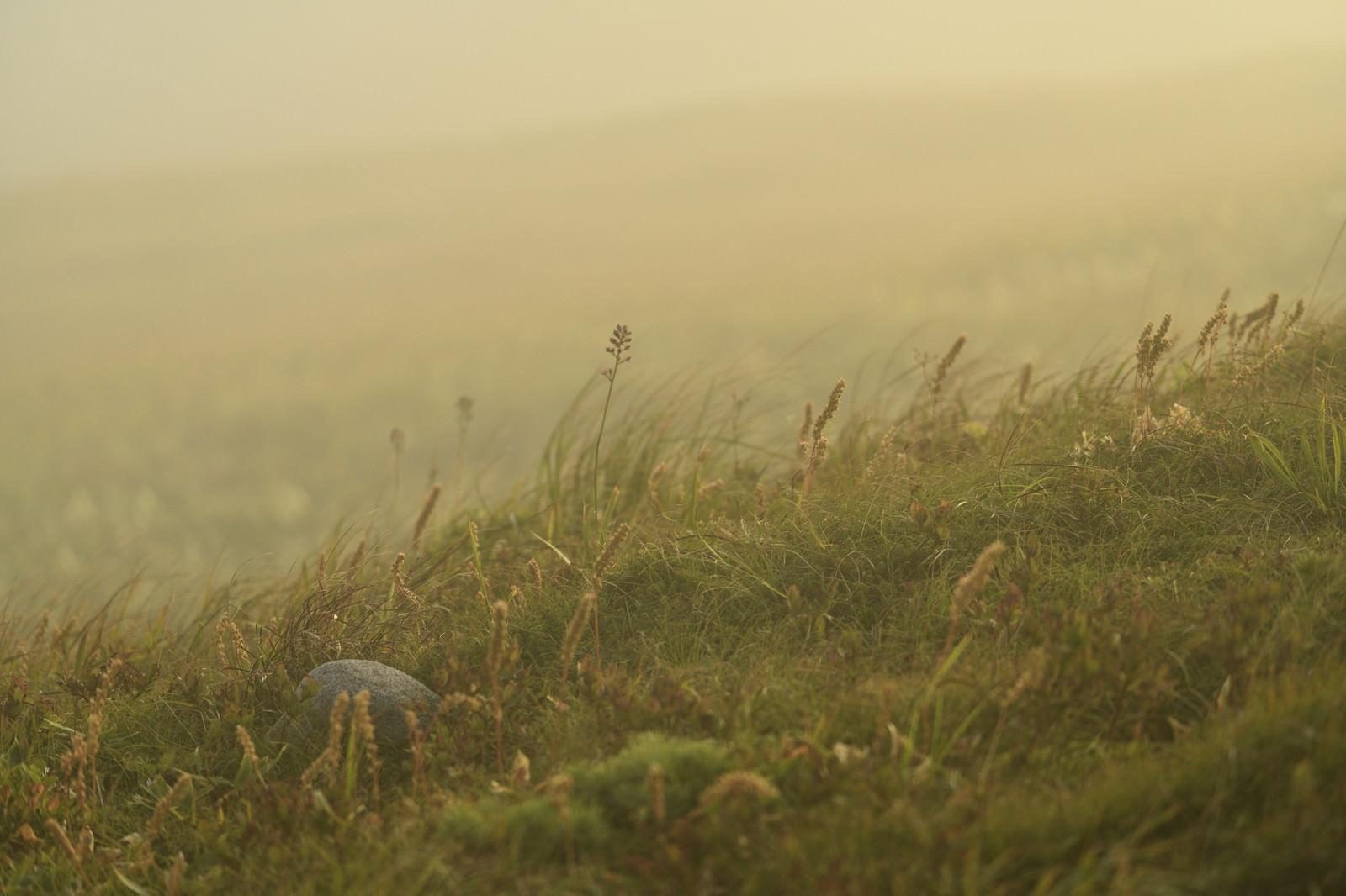 「夕暮れを待つ高山植物」の写真