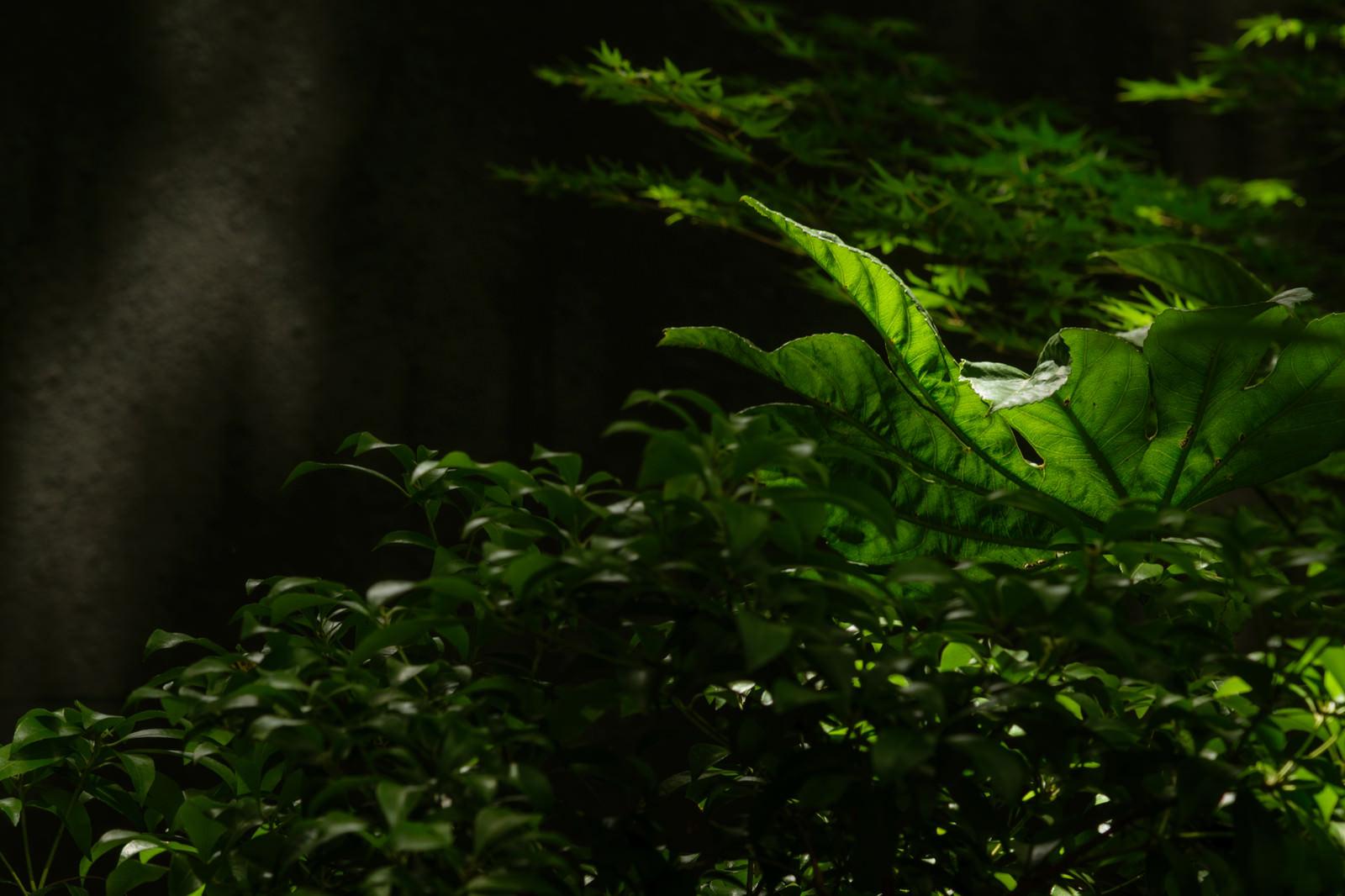 「木漏れ日と観葉植物」の写真