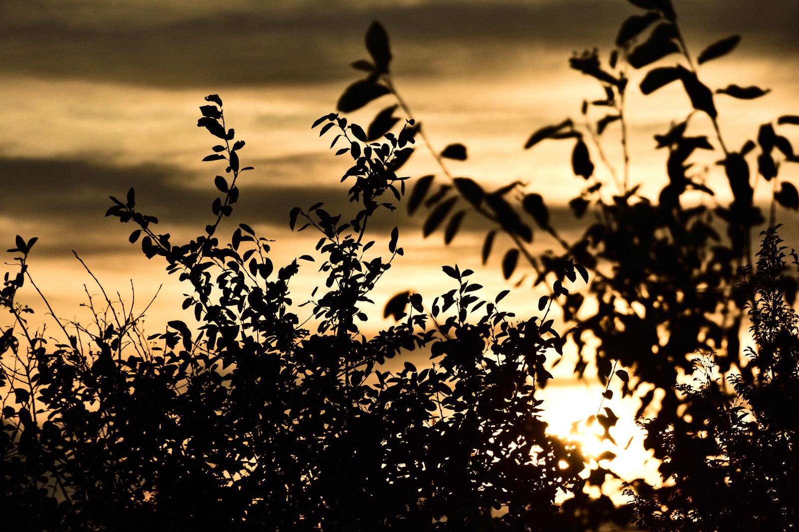 「黄金色に染まる夕日と木々のシルエット」の写真