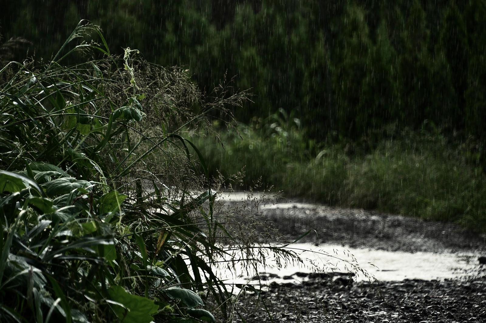「雨の農道」の写真