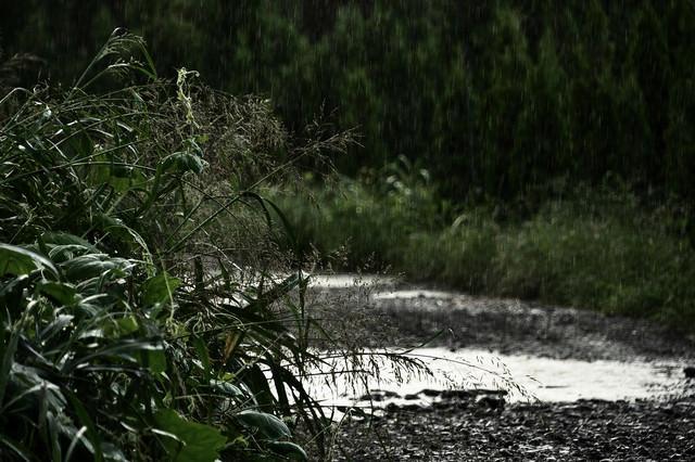 雨の農道の写真