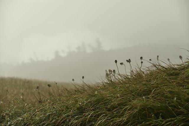 雲の中の高山植物の写真