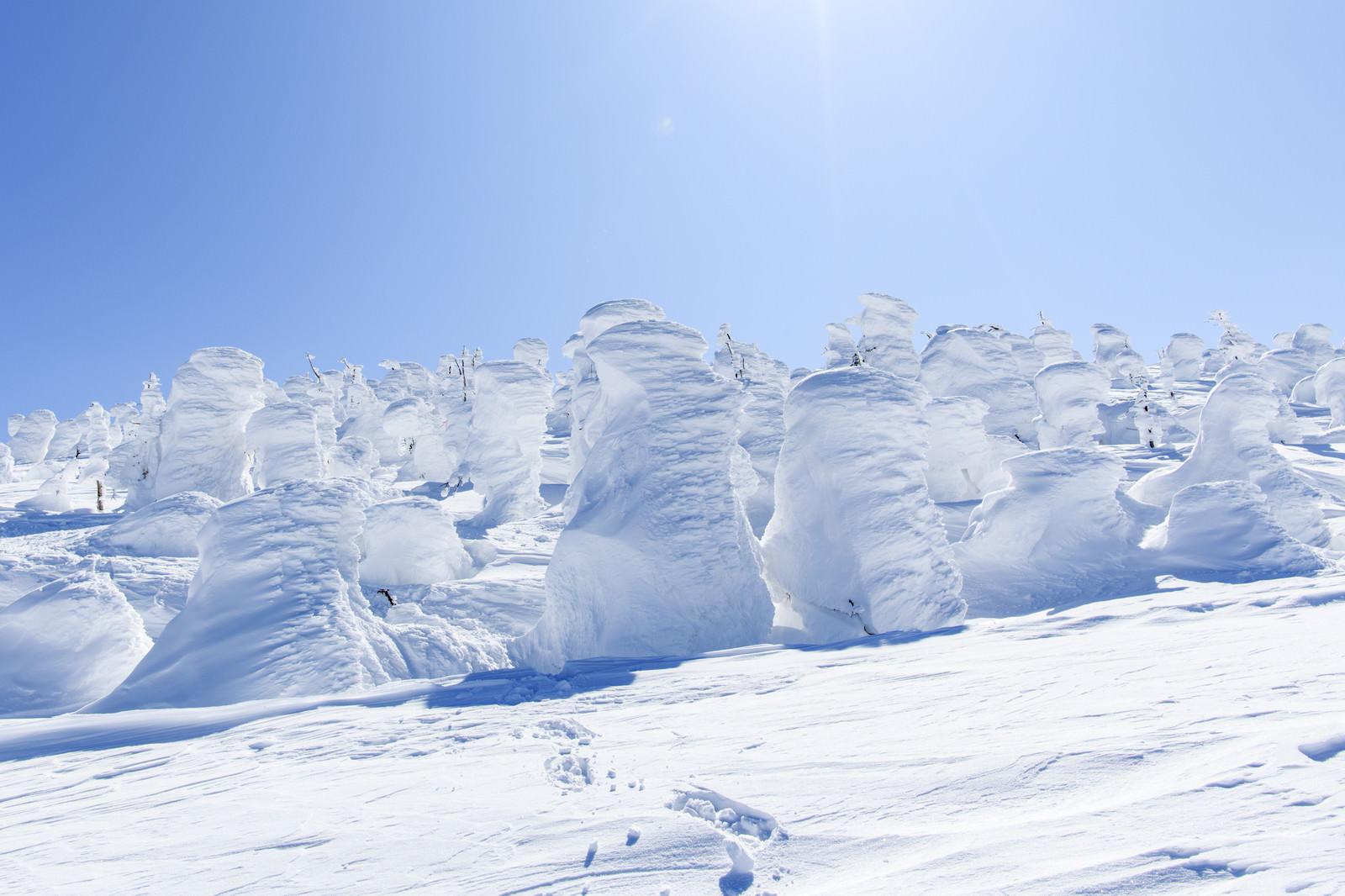 「行く手を阻むリトルスノーモンスター(樹氷)」の写真