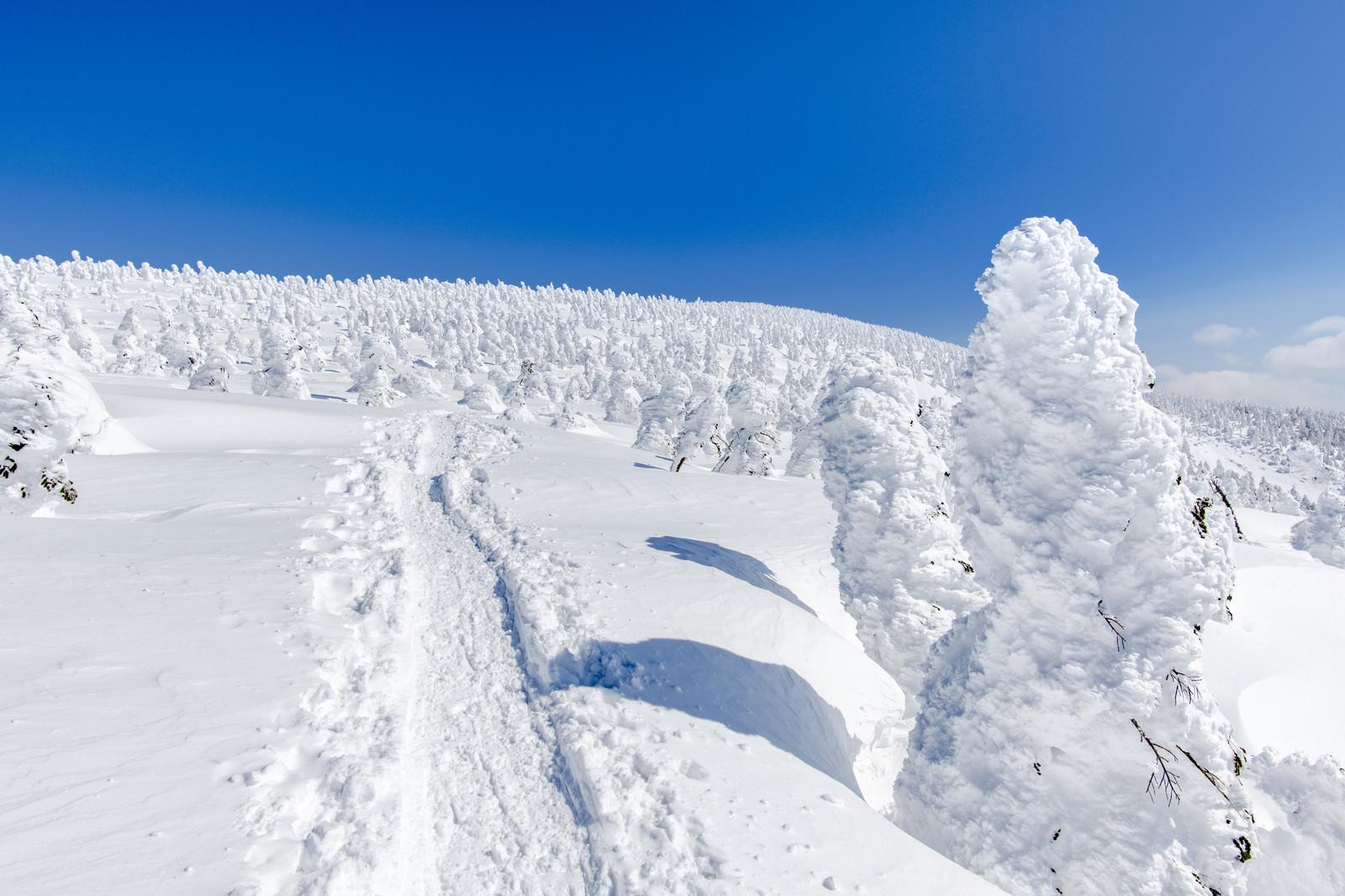 「樹氷原に続く道」の写真