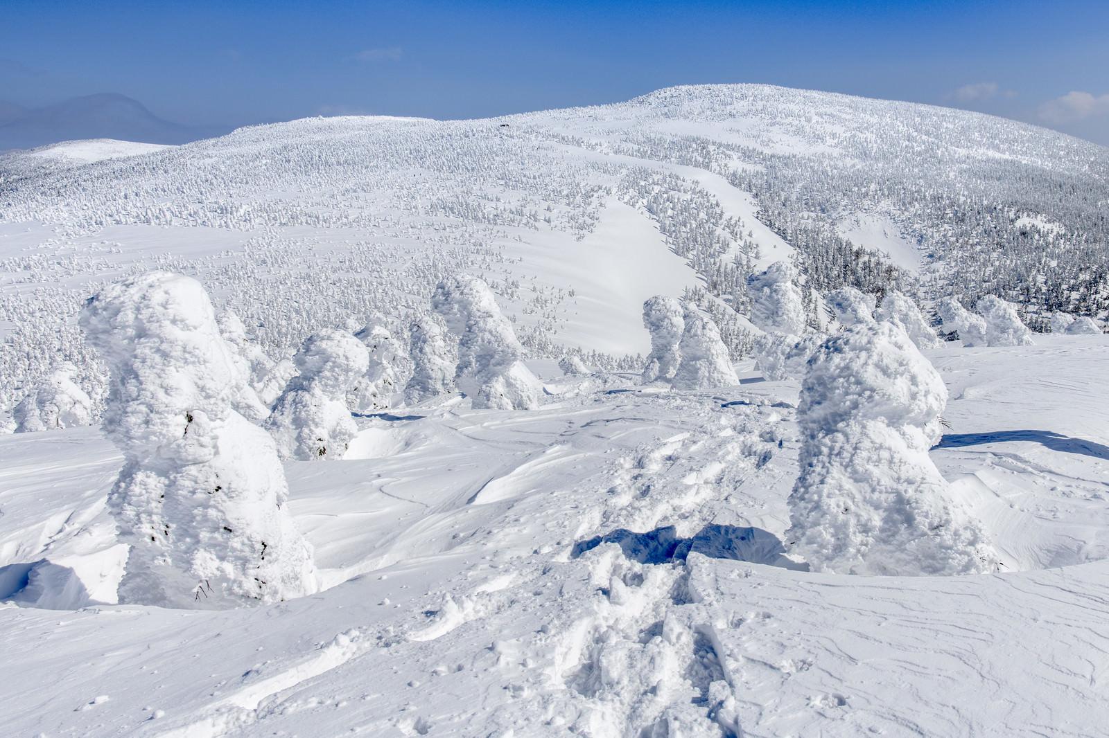 「樹氷原に残る足跡」の写真