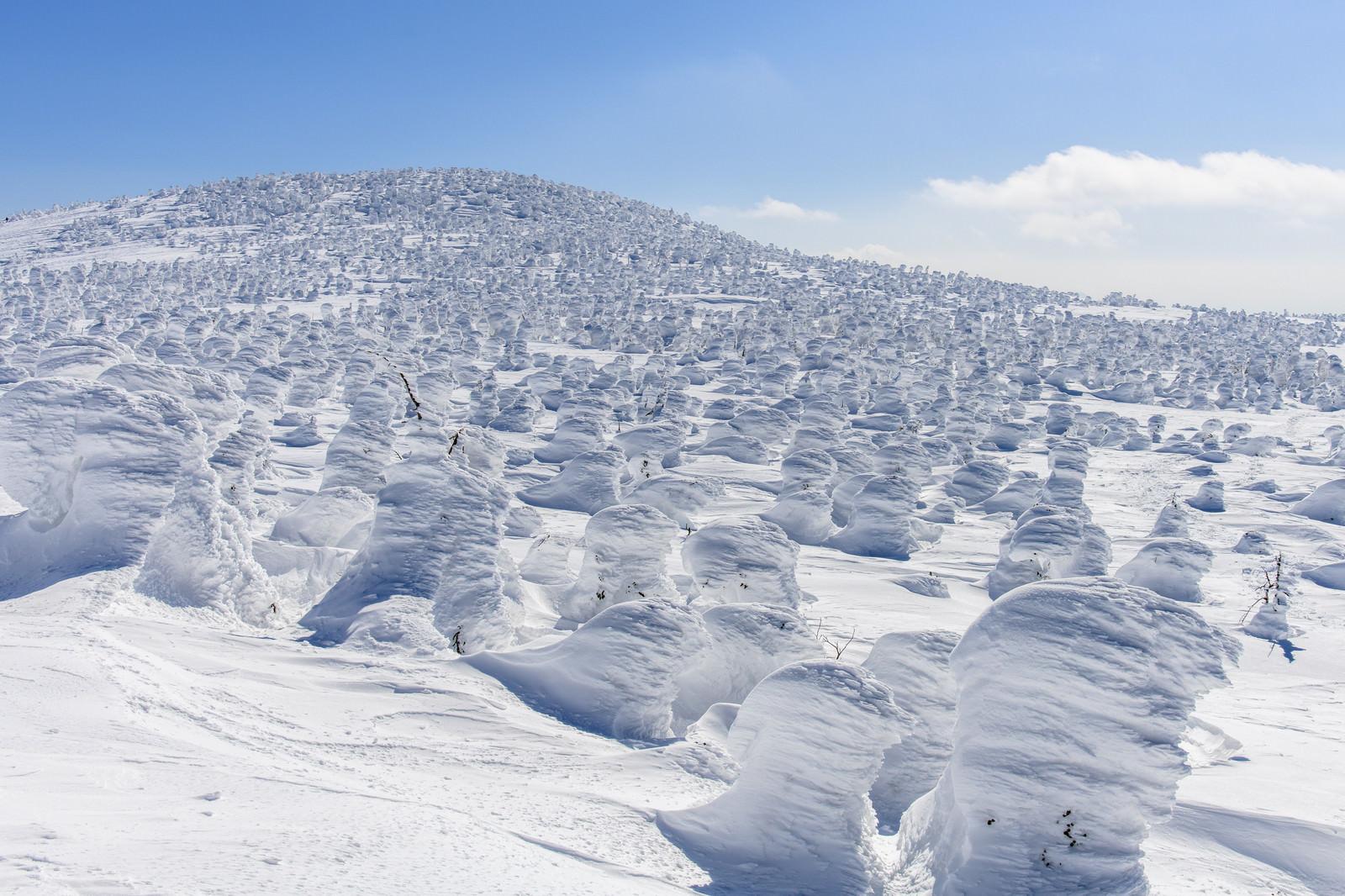 「西吾妻山のスノーモンスター」の写真