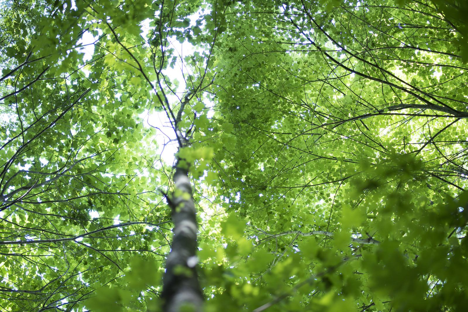「輝く新緑の森(瑞牆山)」の写真