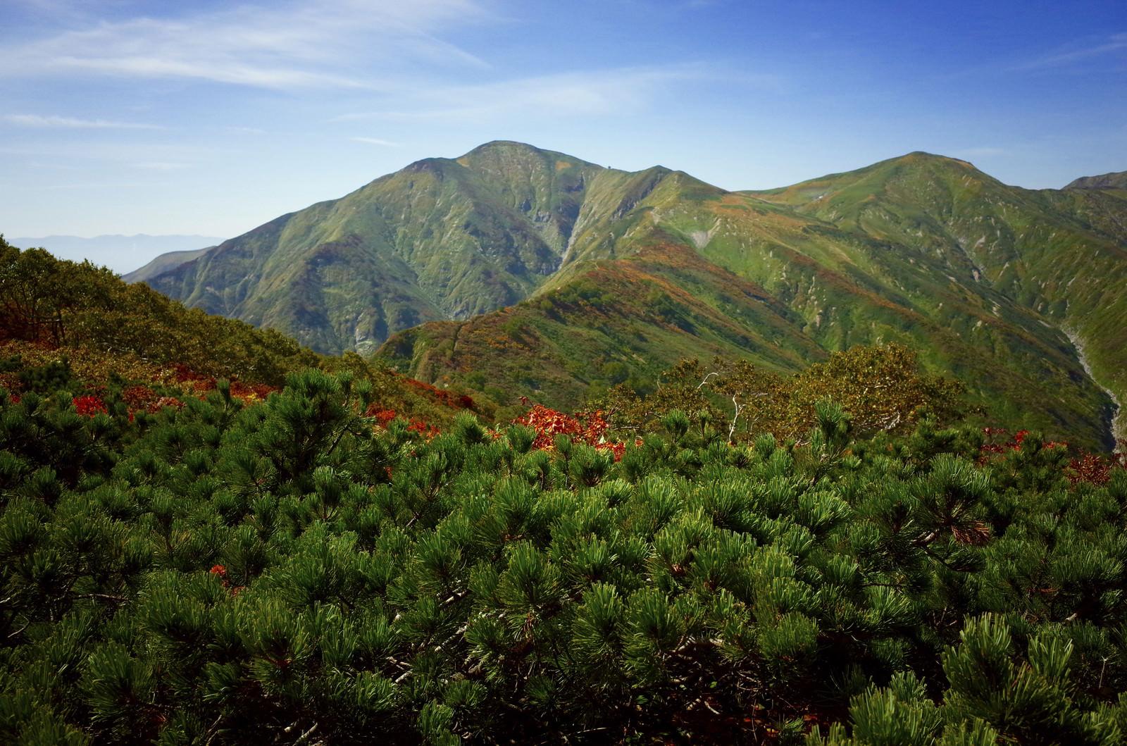 「ハイマツと紅葉の大朝日岳(おおあさひだけ)」の写真