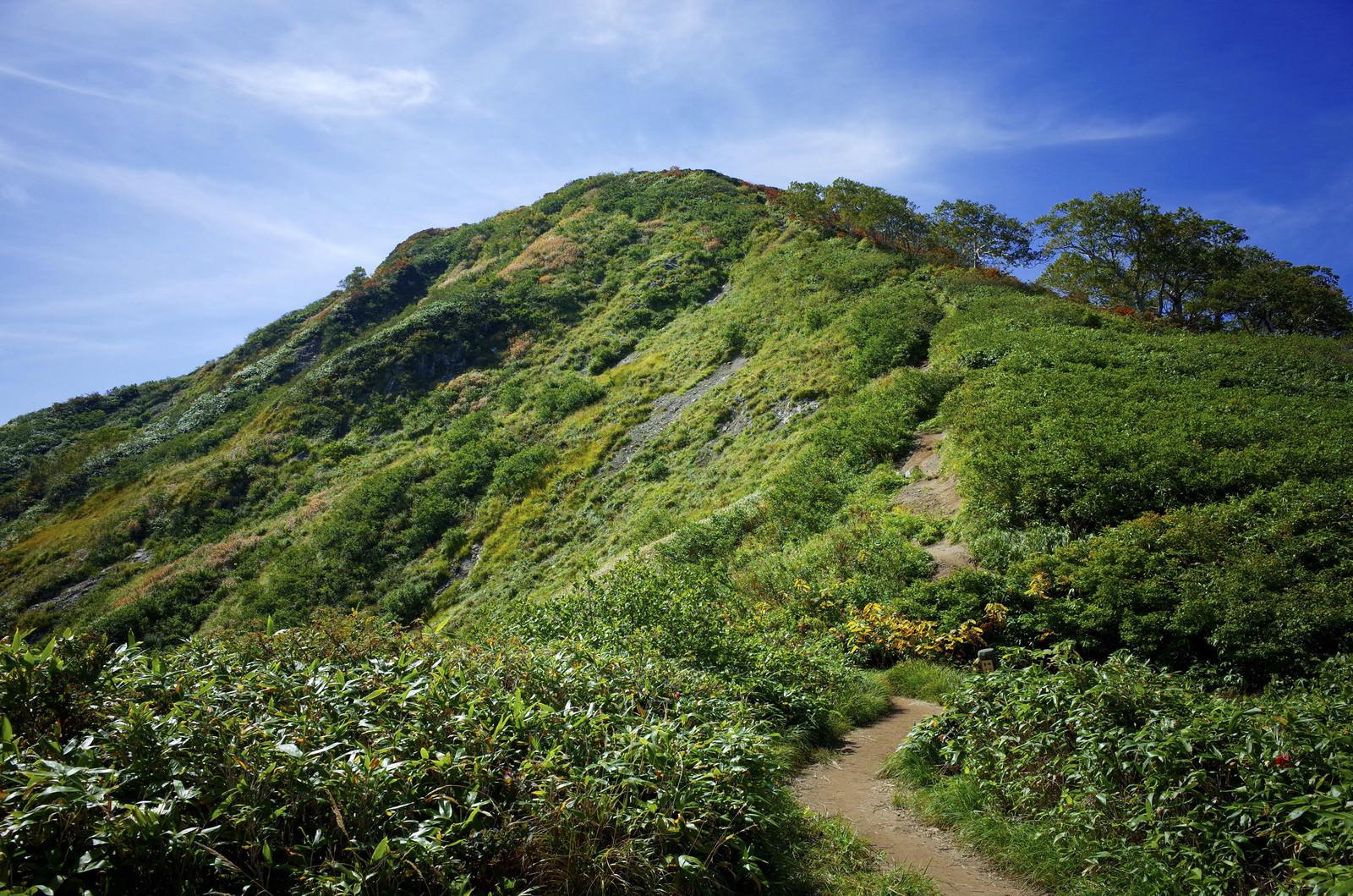 「小朝日岳山頂への道(大朝日岳)」の写真