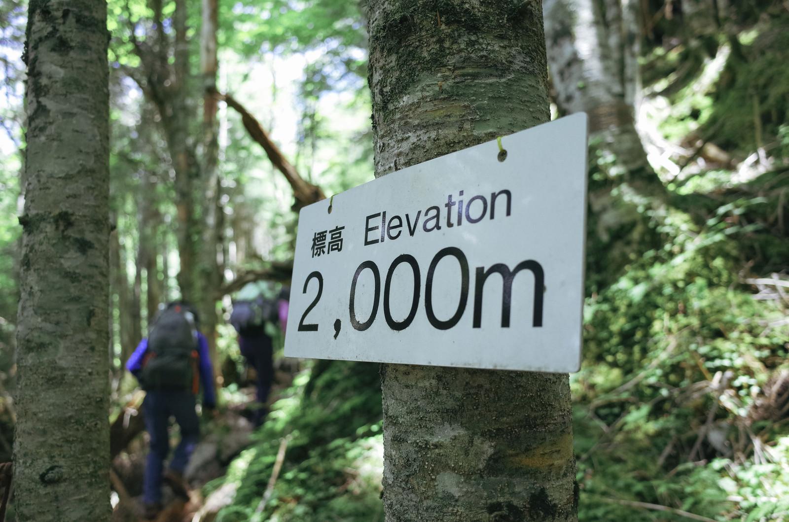 「標高2000mの森の中を進む(聖岳)」の写真