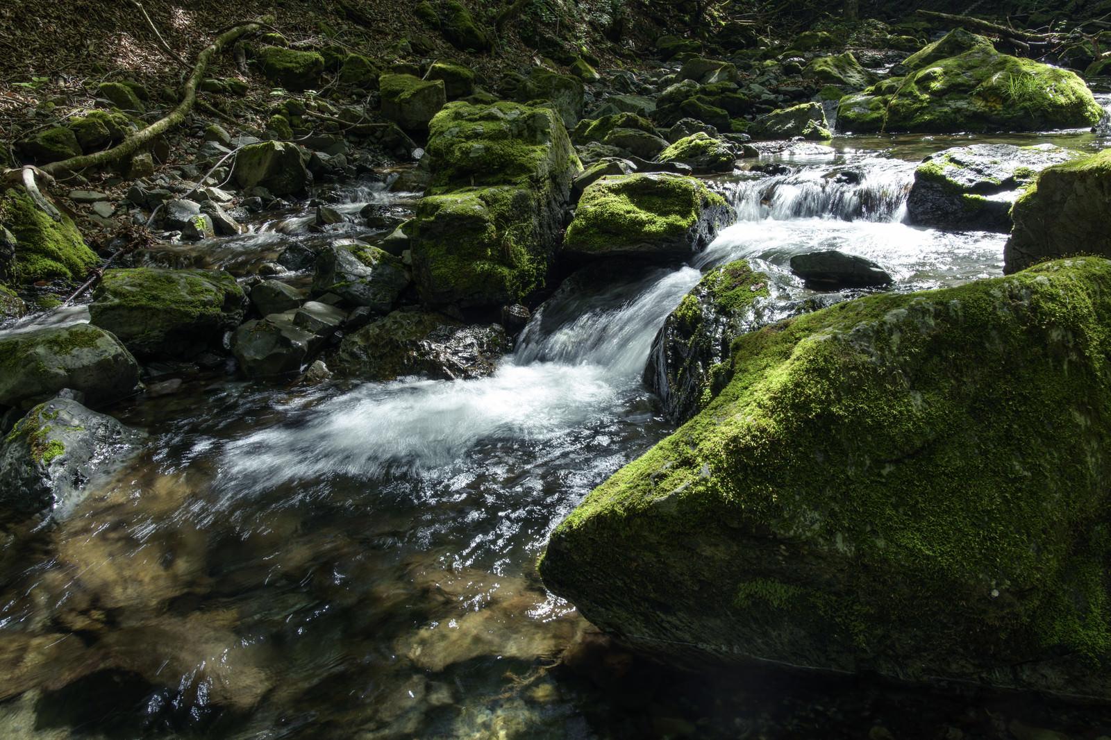 「川苔山を流れる渓流と苔」の写真