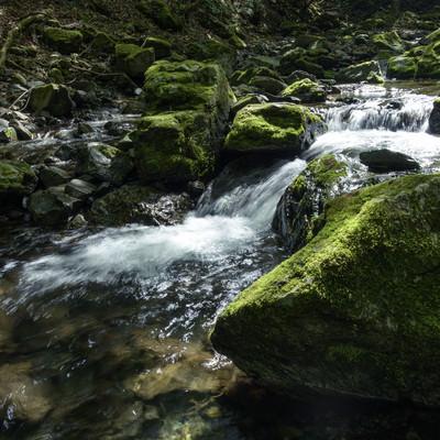 川苔山を流れる渓流と苔の写真