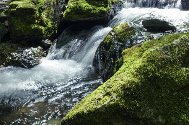 川苔山を流れる渓流の写真