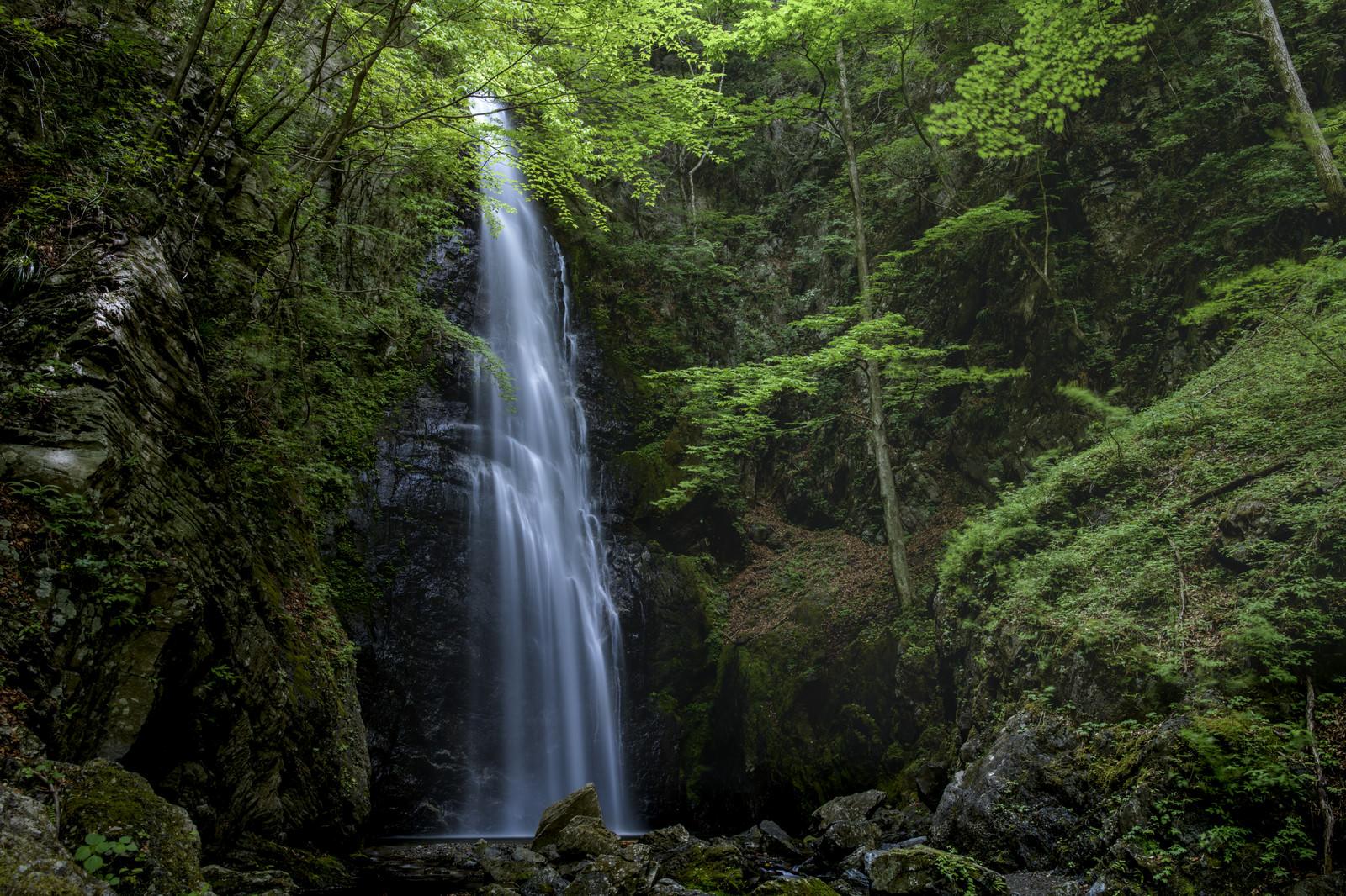 「川苔山中腹にある百尋の滝」の写真
