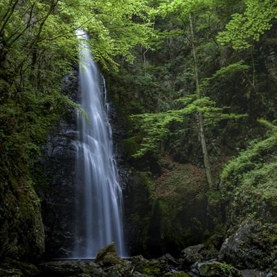 川苔山中腹にある百尋の滝の写真