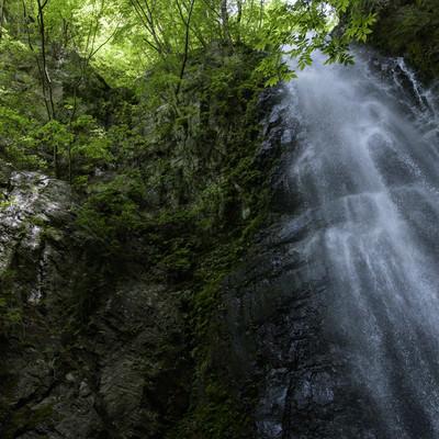 百尋の滝と新緑の写真