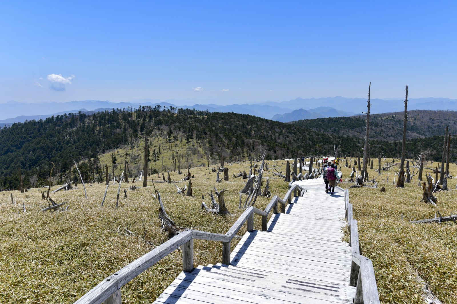 「立ち枯れの木々と散策する登山者(大台ヶ原山頂周辺)」の写真