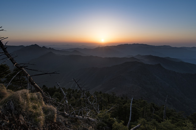 立ち枯れした木々と大台ヶ原から登る朝日の写真