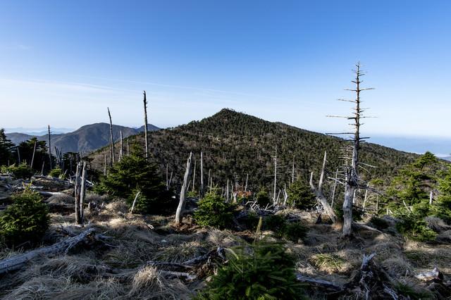 大峰山弥山小屋から見る立ち枯れの森と八経ヶ岳の写真