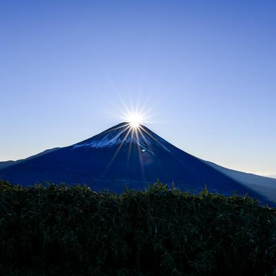竜ヶ岳から見る富士山に上がるダイヤモンド富士の写真