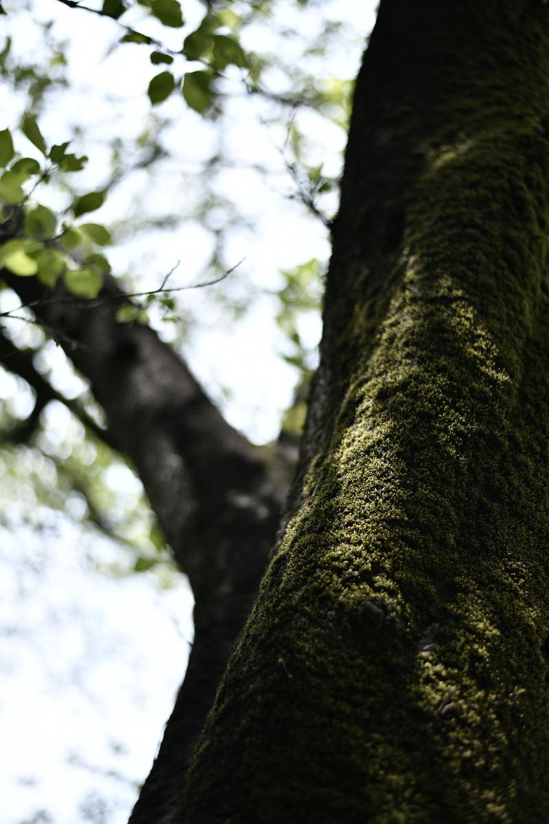 「春になり緑が豊かになりゆく苔」の写真