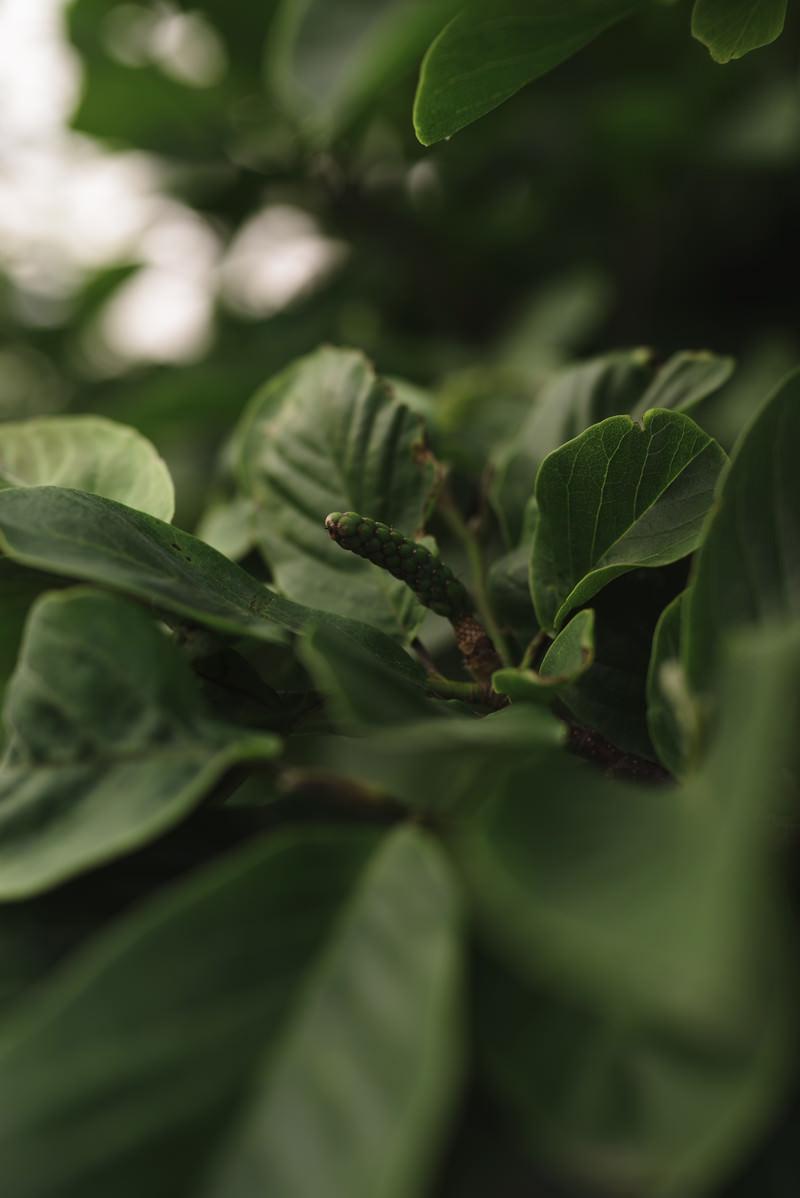 「新緑の中に混じる種子」の写真