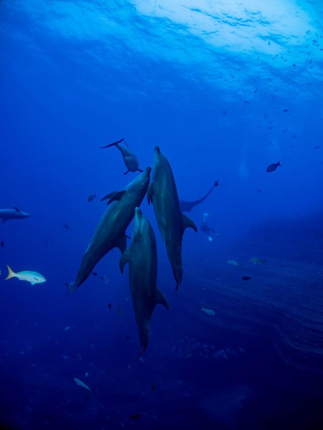 寄り添うイルカの群れと魚の群れの写真