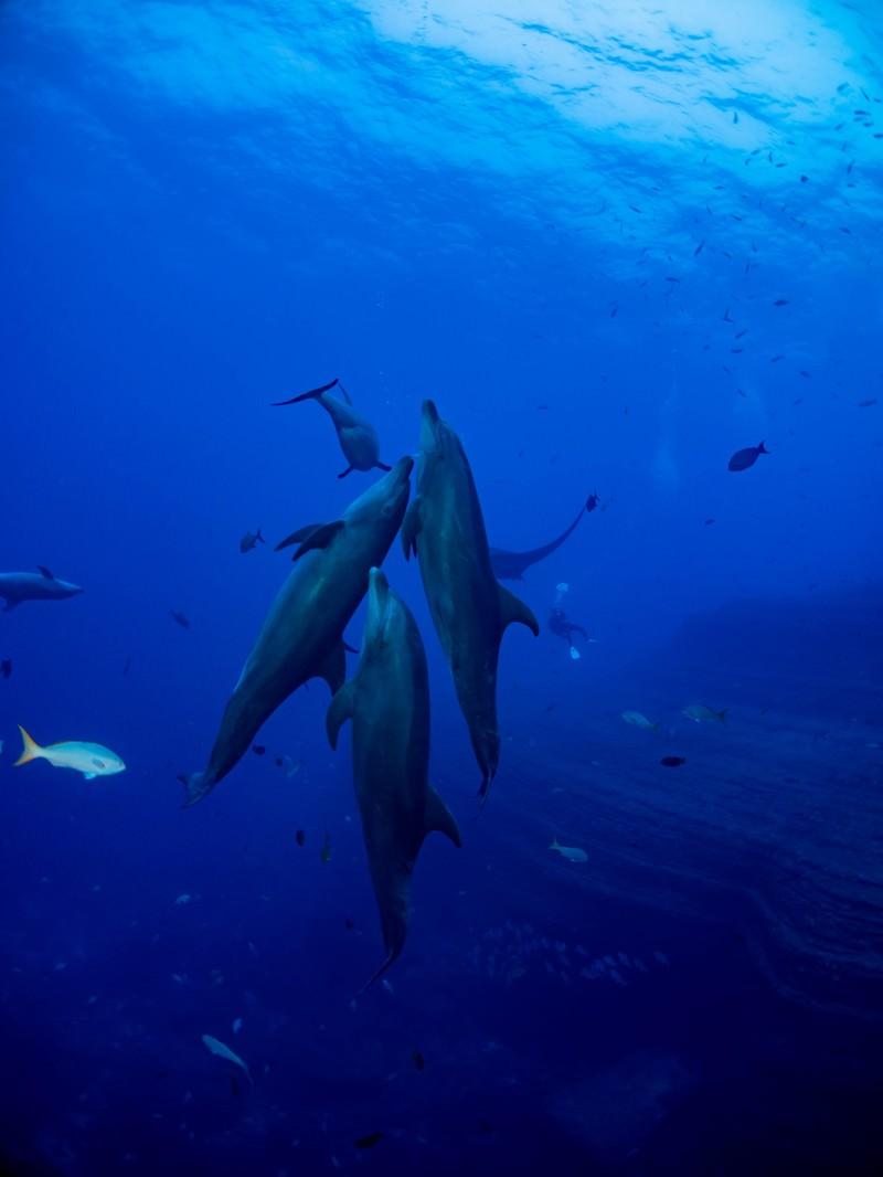 「寄り添うイルカの群れと魚の群れ」の写真