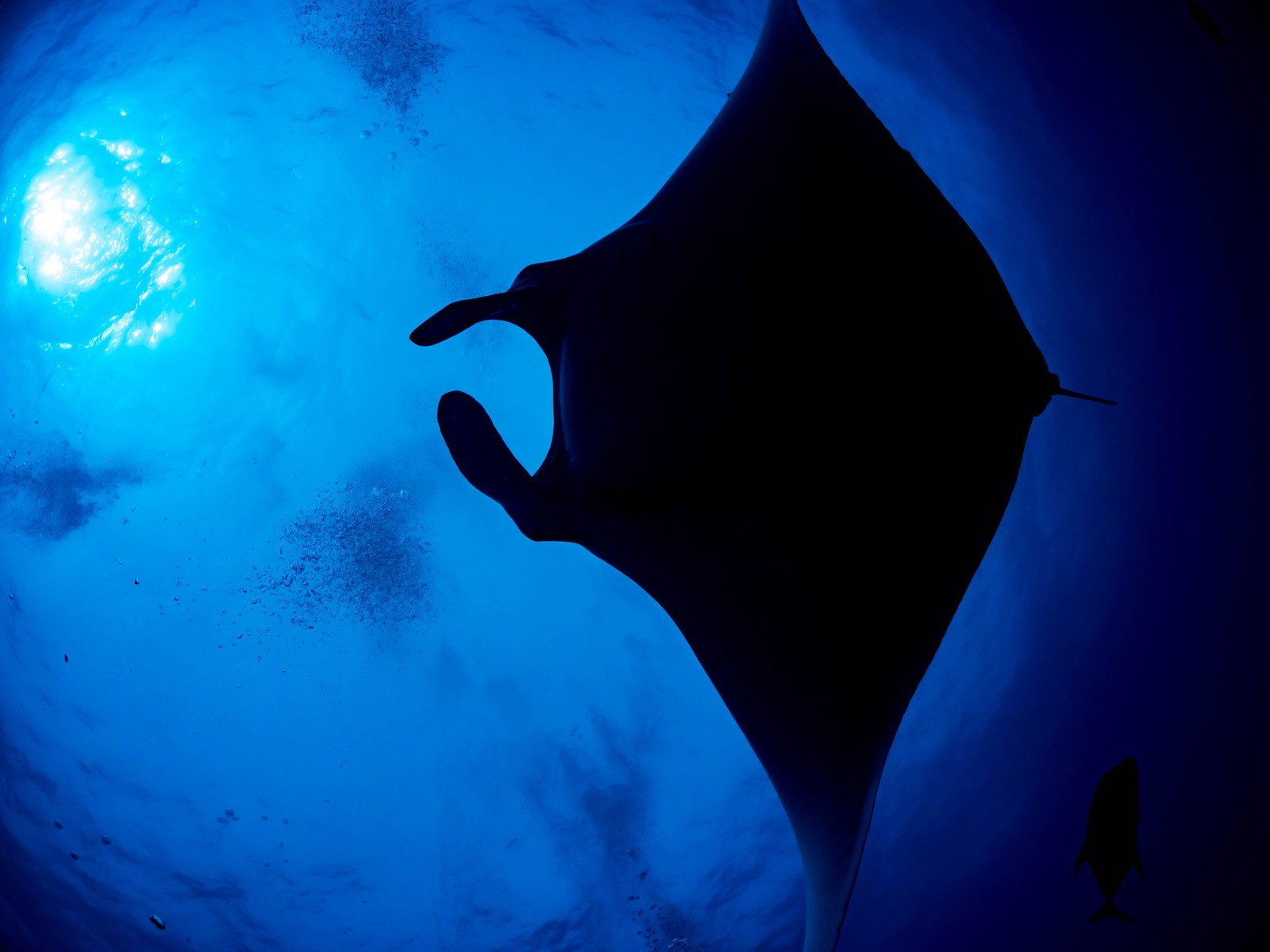 「海中に漂う泡とジャイアントマンタのシルエット」の写真
